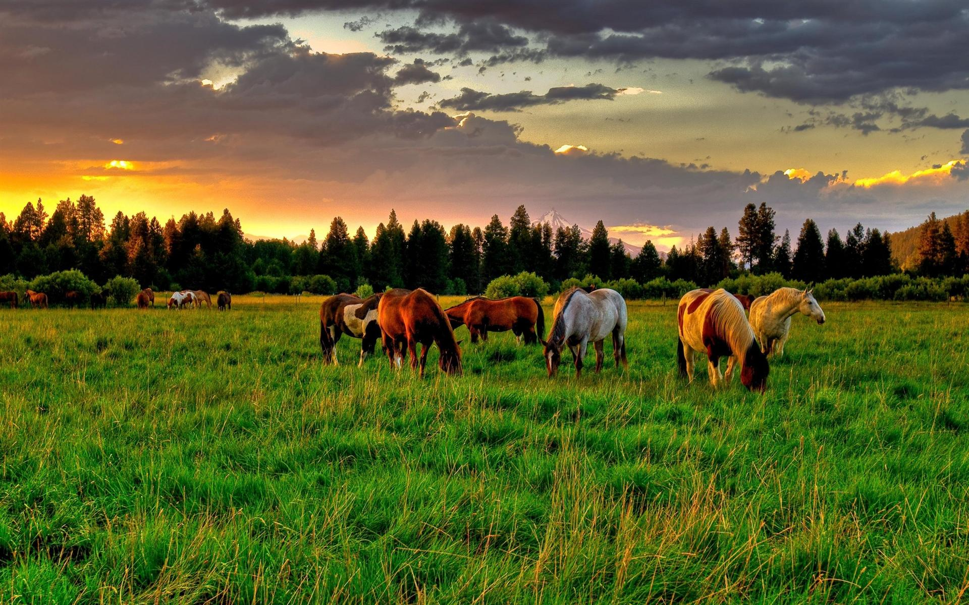 horse-farm-hd-wallpaper-download-horse-farm-images-free