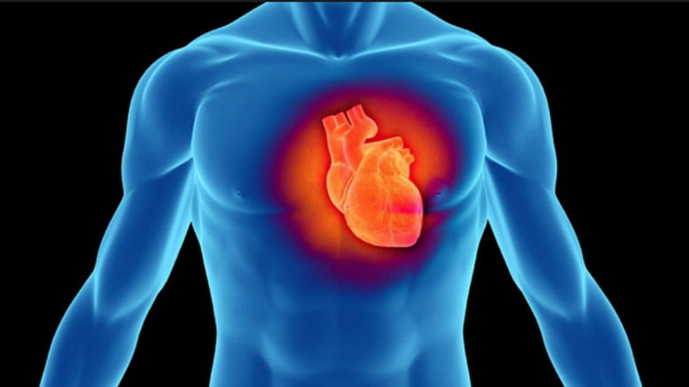 Inima-în-interiorul-toracelui